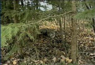 Buckshot's Advanced Predator Trapping DVD